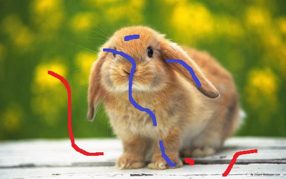 bunny_scribed
