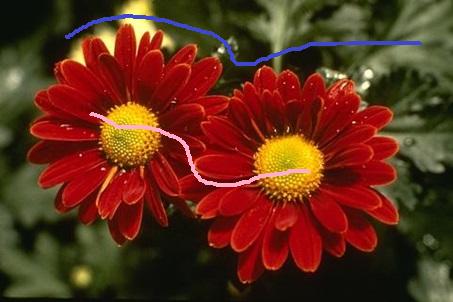 flowers_scribed
