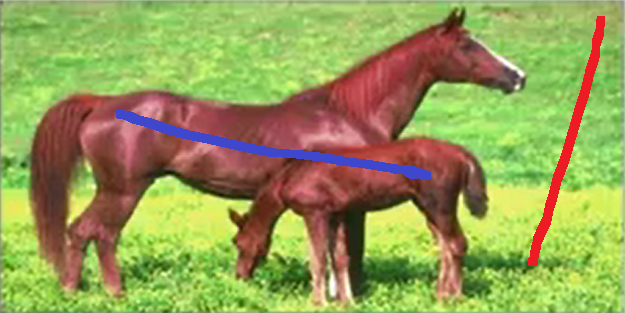 horses_scribed