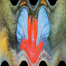 mandrill_w.png